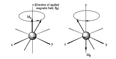 Figure 1. Precession of nuclear magnetization, M. Ma represents the magnetization produced by population of nuclei with a-spin state, while Mß represents the magnetization produced by population of nuclei with ß-spin state.