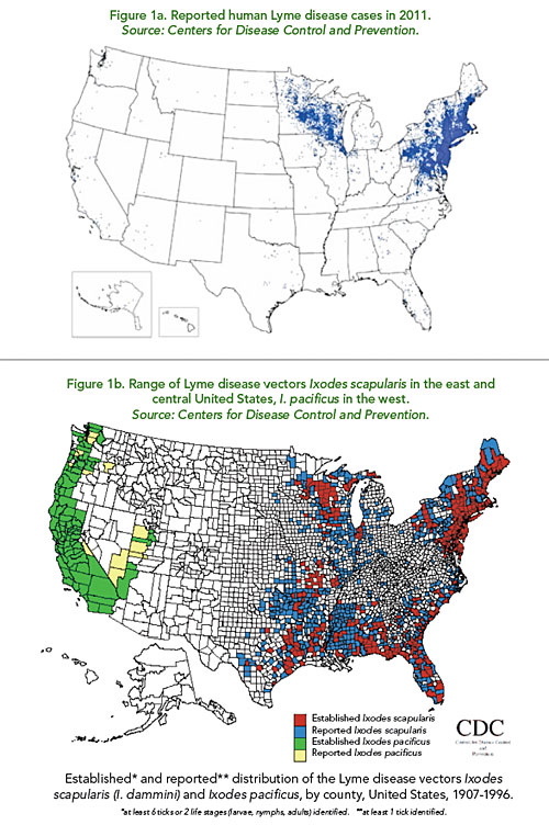 What Causes the Strange North American Pattern of Lyme Disease?