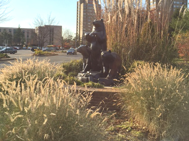 The 'Three Bears' sculpture by Paul Manship with ornamental grasses blooming.
